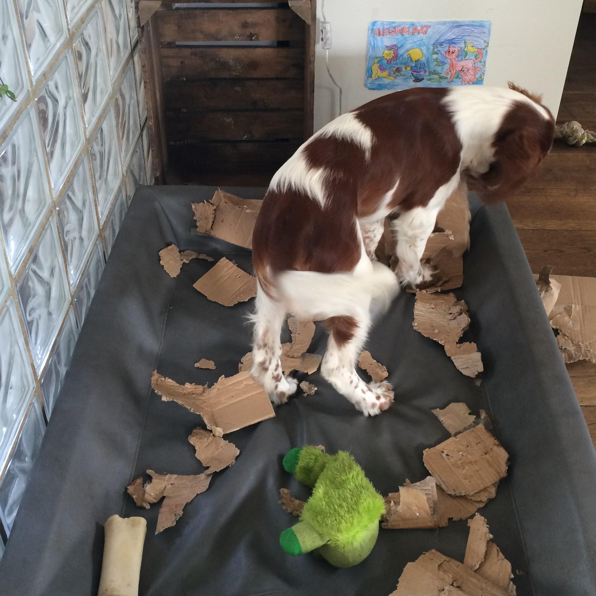 Gedragstherapie hondenschool Frauke Kneepkens