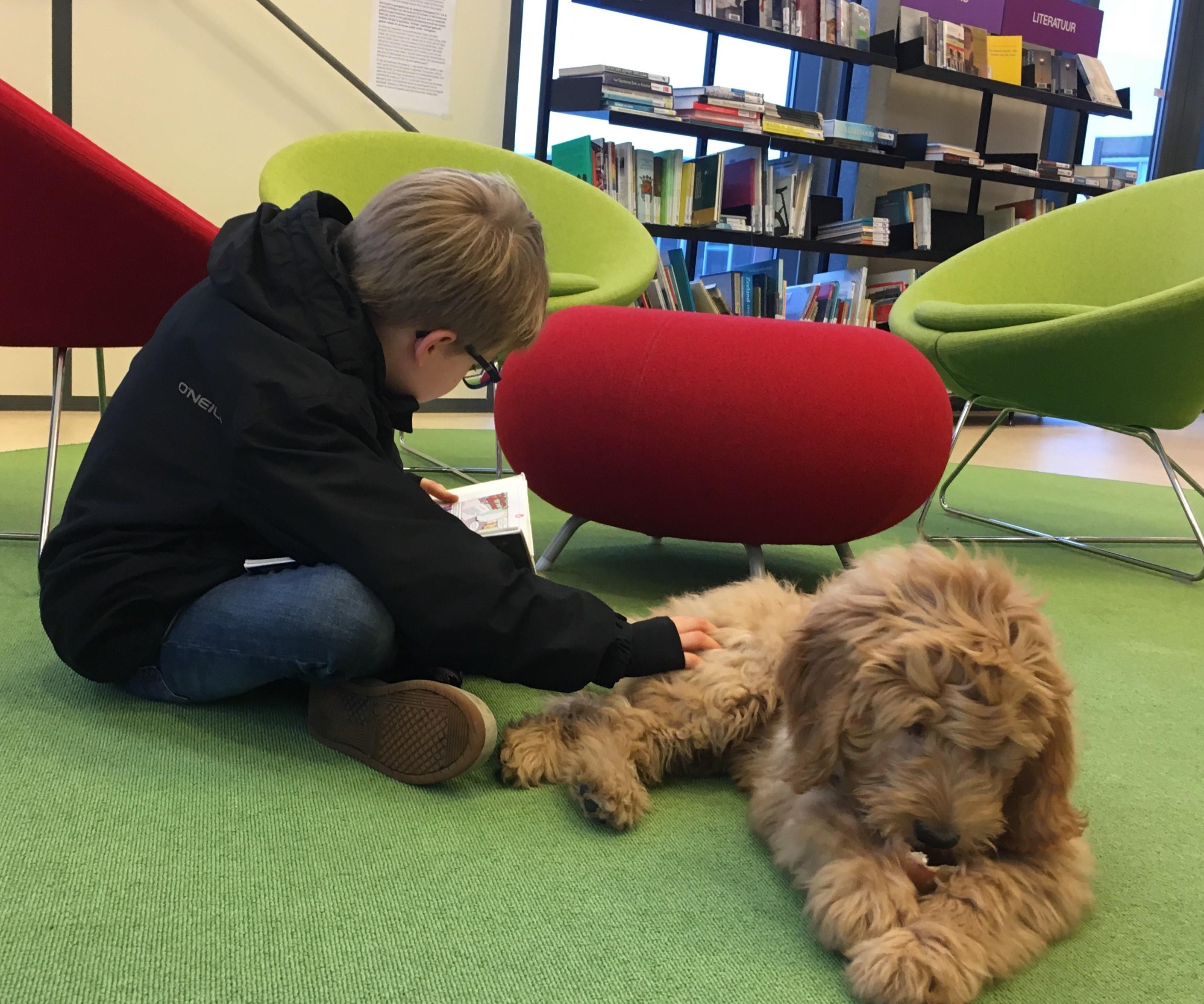 Hondenschool Frauke Kneepkens Schouwen-Duiveland
